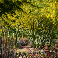 Best Inspirations : ASLA 2012 Professional Awards Sunnylands Center Amp Gardens - Karbonix