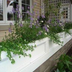 Landscaping Ideas Plants House - Karbonix