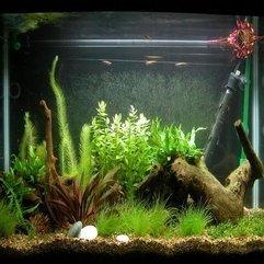 Tank Decoration Ideas Bogwood Fish - Karbonix
